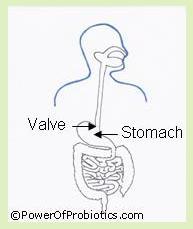 Patient Education Stomach Acid