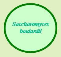 Saccharomyces boulardii is a probiotic yeast